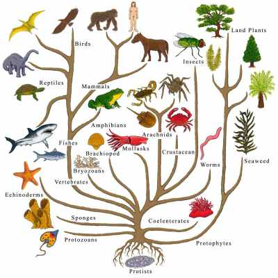 The tree of life, evolution picture