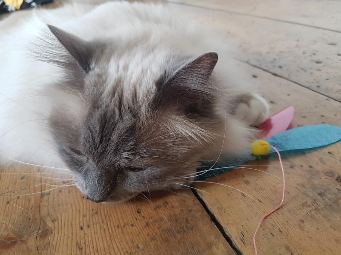 Cat sleeping on toy
